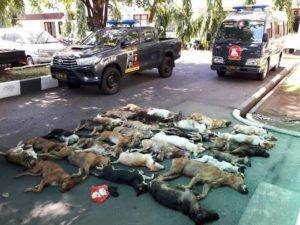 Barang bukti 29 ekor anjing yang telah mati diamankan Tim Manguni Ditreskrimum Polda Sulut